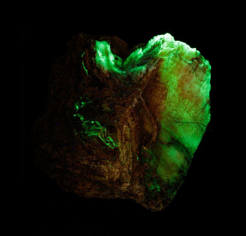 Opal in Petrified Wood (RARE - Thailand) Chet Lemanski Coll.