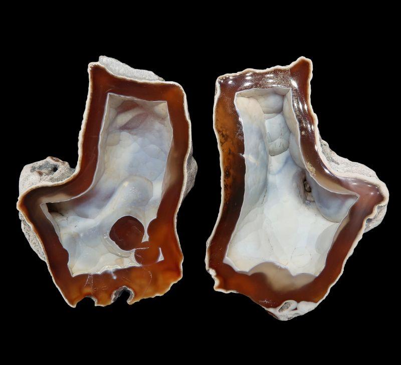 Quartz var. Agate in fossil coral (set) ex Halpern Collection