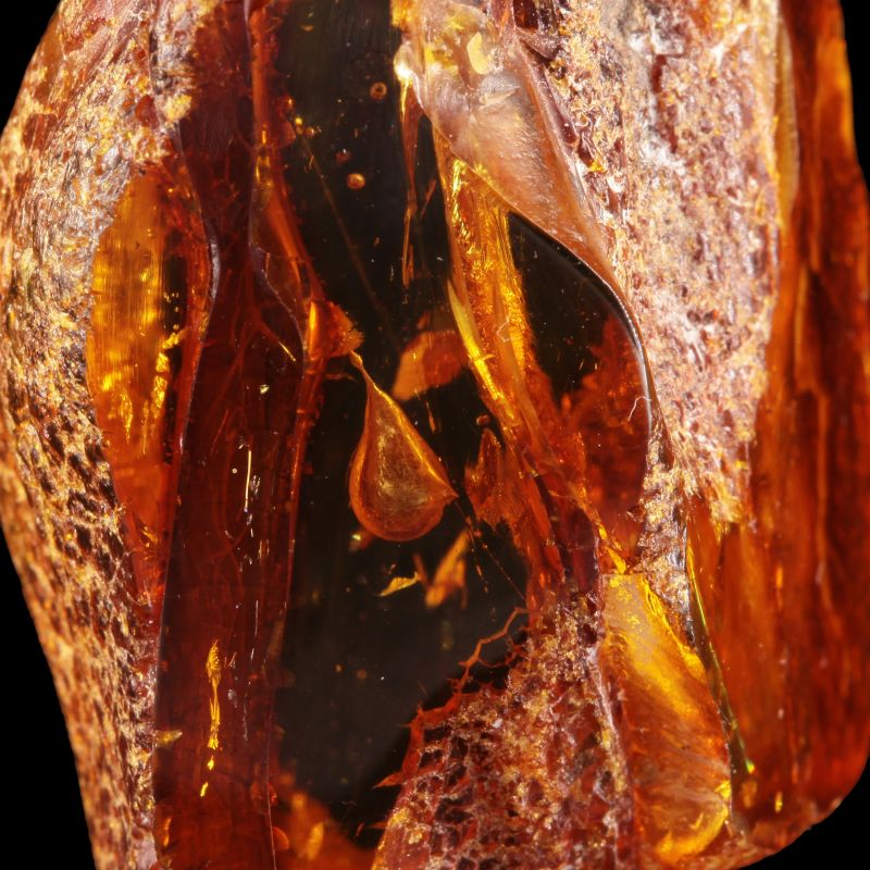 Amber (Succinite) (with SPIDER WEB inclusion!) (ex Wouter Van Tichelen Collection)