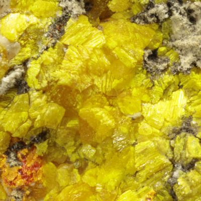 Orpiment and Realgar Replacing Fossil Coral (rare and unusual)